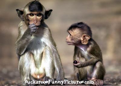 Animal Funny Pictures on Funny Animals Talking Monkeys Remote Control Jokes Monkey Jokes Animal